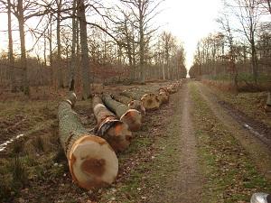 Grumes de chêne entières toutes qualités