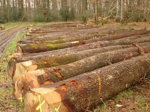 Grumes de chêne qualité découpe plots et merrains3